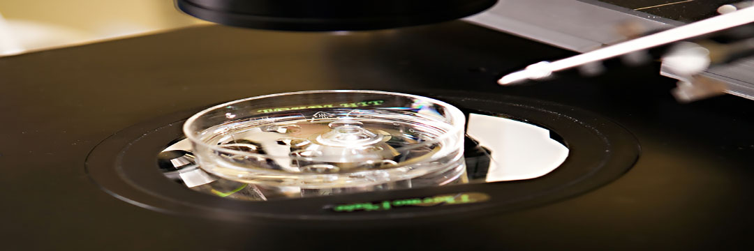 How IVF Can Help You Conceive