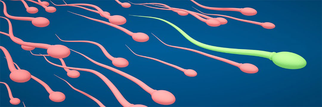 TOI Interviews Dr. Rita Bakshi on Increasing Sperm Costs in India